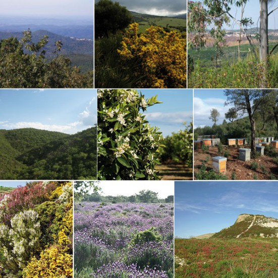 Cuídate con VerdeMiel Miel Cruda Ecológica de Andalucía