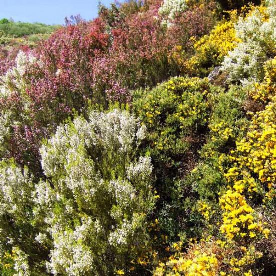 VerdeMiel 100% Miel Cruda Ecológica Flores silvestres de Andalucía