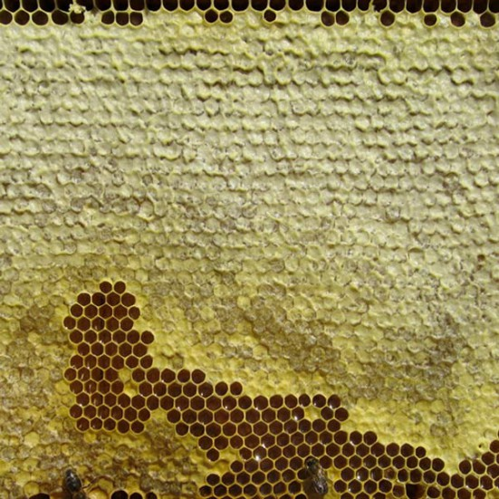 Miel Ecológica Montaña (copia)