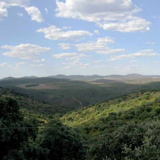 VerdeMiel 100% Miel Cruda Ecológica Montaña de Andalucía