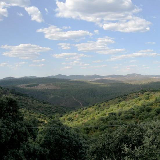 Miel Ecológica Montaña