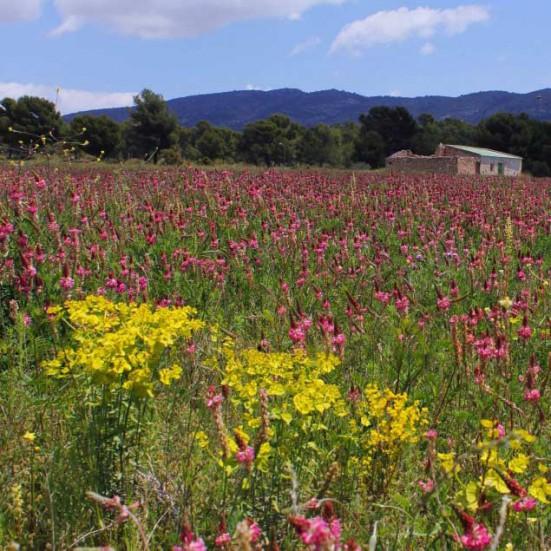 VerdeMiel 100% Miel Cruda Ecológica Primavera de Andalucía