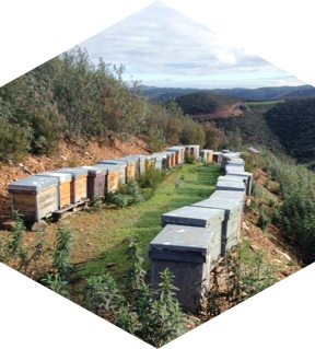 Image of apiaries